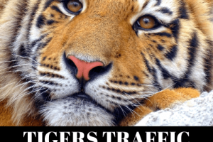 Tigers-Traffic-Review