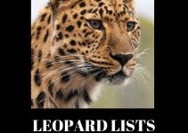 Leopard-Lists-Review